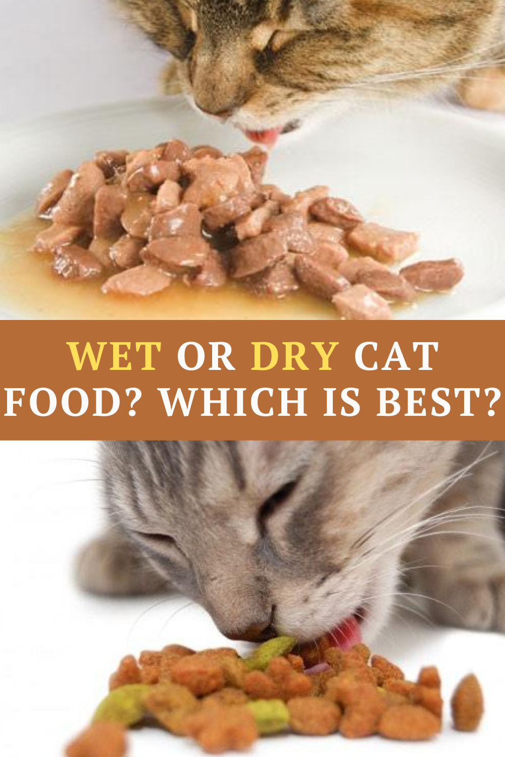 Wet Or Dry Cat Food What Should You Feed Your Cat In 2020 Dry Cat Food Cat Food Coupons Cats