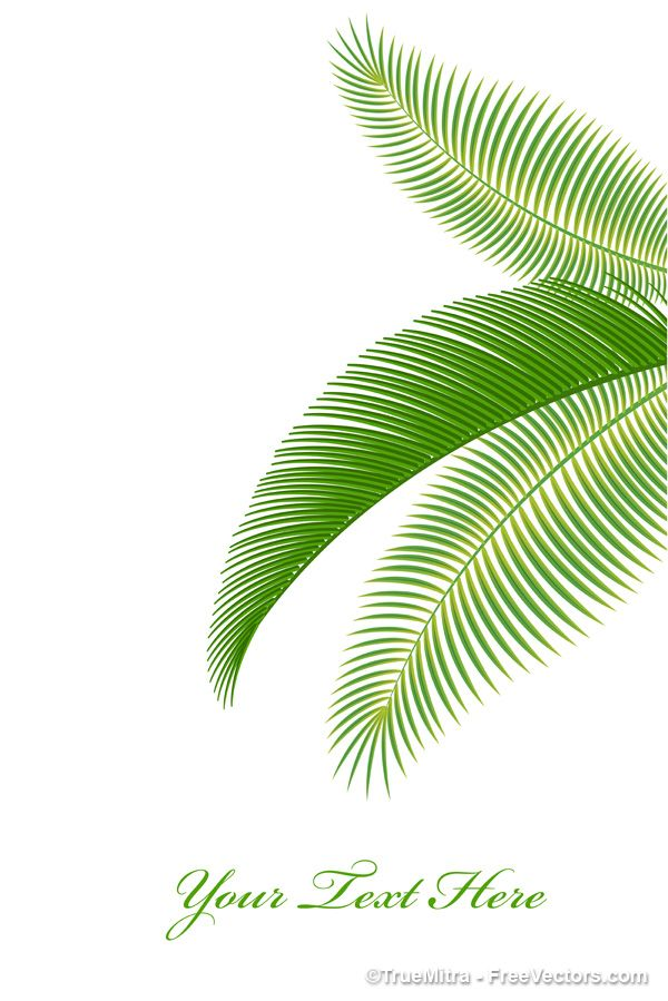 Download Free Palm Tree Leaves Vector Illustration Palm Tree
