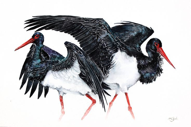 ARTFINDER:  black storks-Original watercolors pa... by Karolina Kijak -  Original watercolors of black storks Paper 350g  100% cotton, high quality pigments size 32x50cm  Follow me on facebook: https://www.facebook.com/kijakw...
