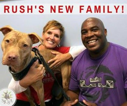 Homeless Dog Who Had Been Making His Bed Every Morning Has Been Adopted Pitbulls Shelter Dogs Homeless Dogs