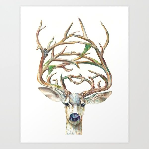 Buck, moss and birds on the over grown antlers