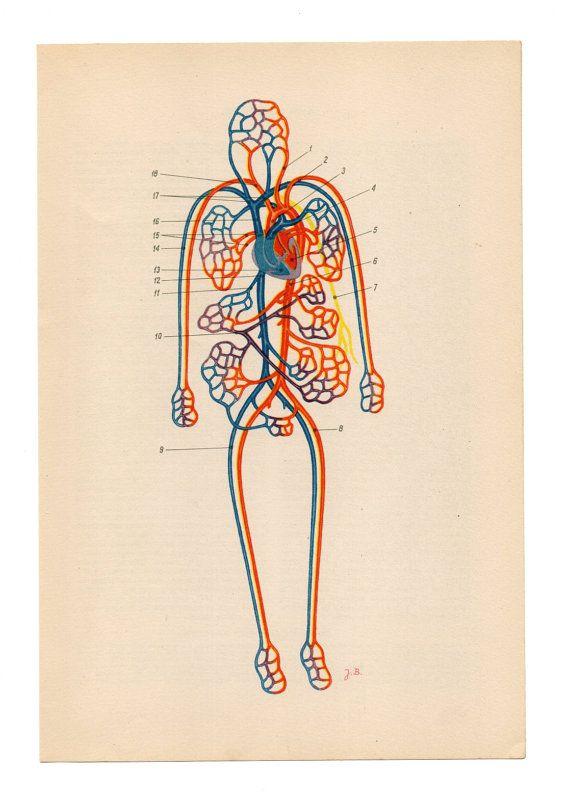 Human Anatomy Poster Medical Art Anatomical Print Anatomy Medical Medicine Retro Art Original Upcycle Recycle Repu Anatomy Art Vintage Illustration Medical Art