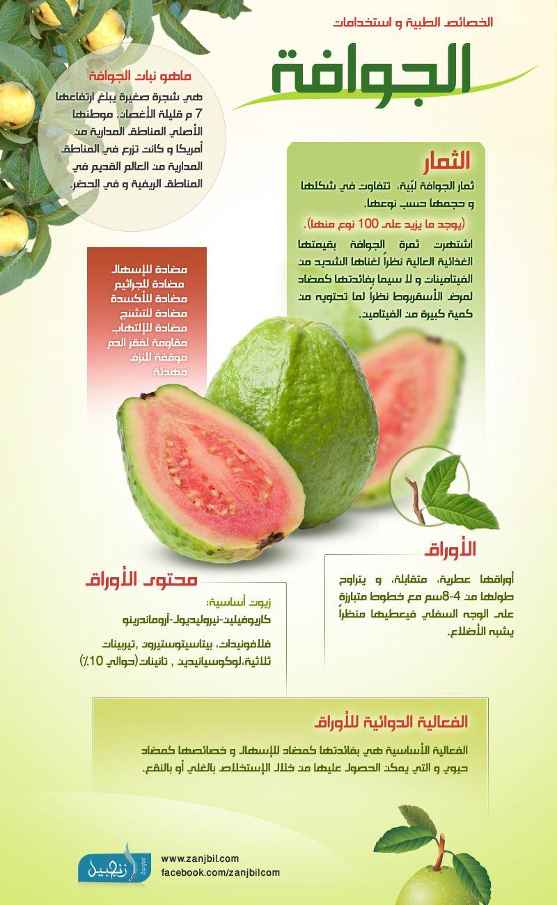 فوائد الجوافة و الخصائص الطبية Health Facts Food Fitness Nutrition Health Guide