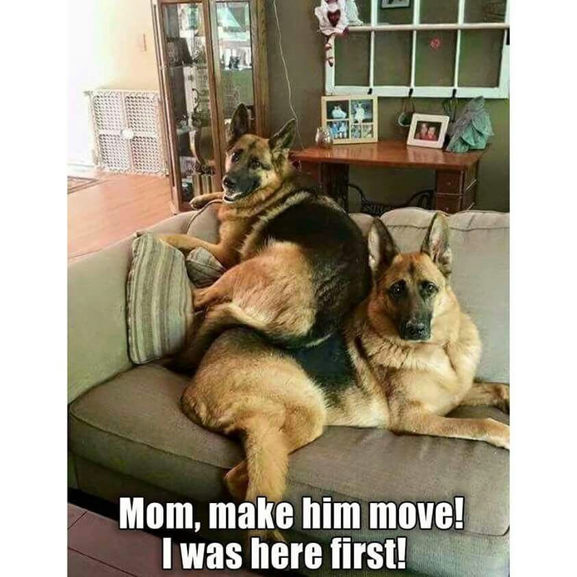 just like my kids .. | Funny Puppy Memes | Pinterest | Dog ...