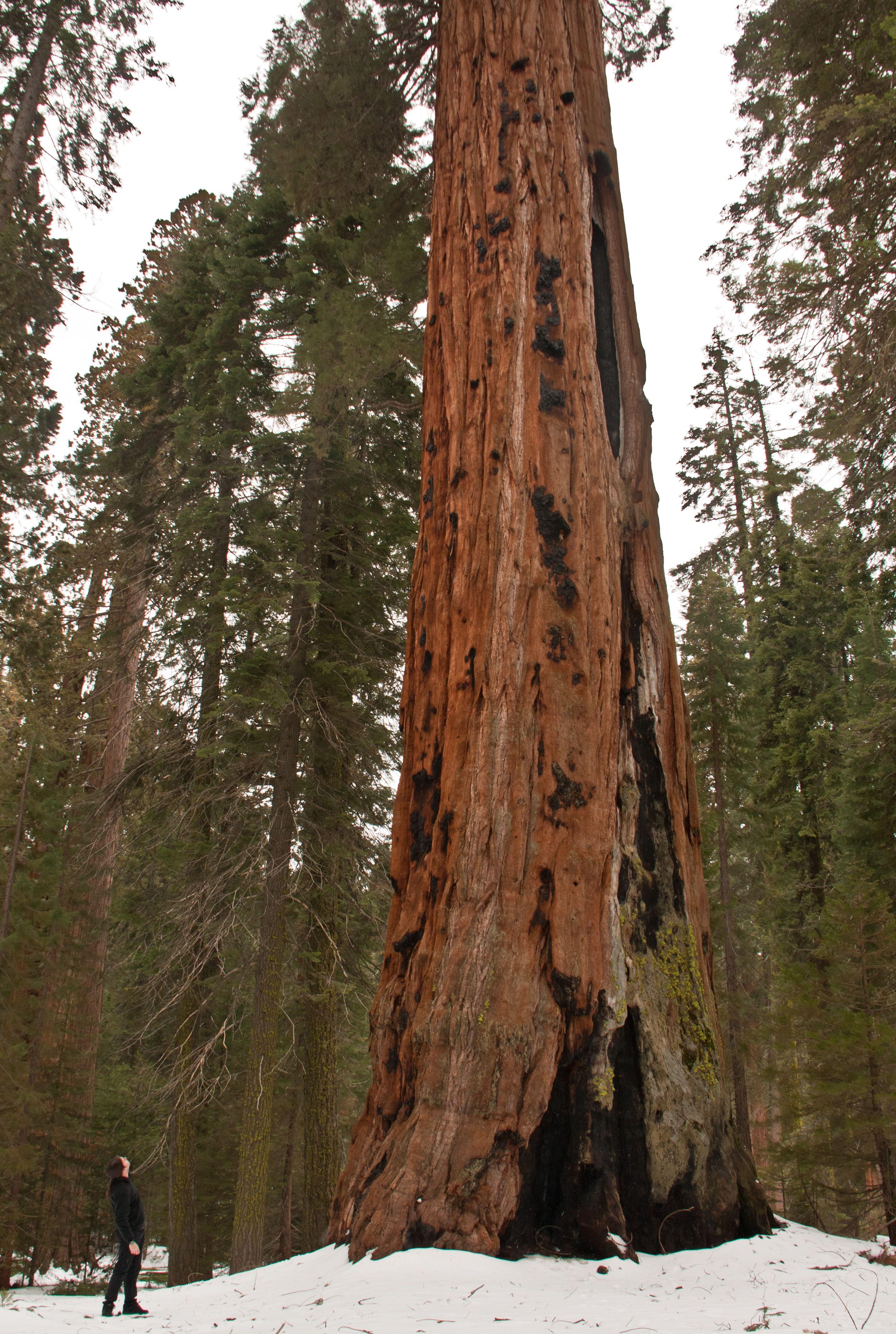 Sequoia National Park, California (2011)