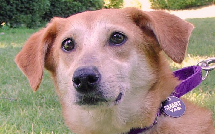 Army veteran vows to save little shelter dog with big