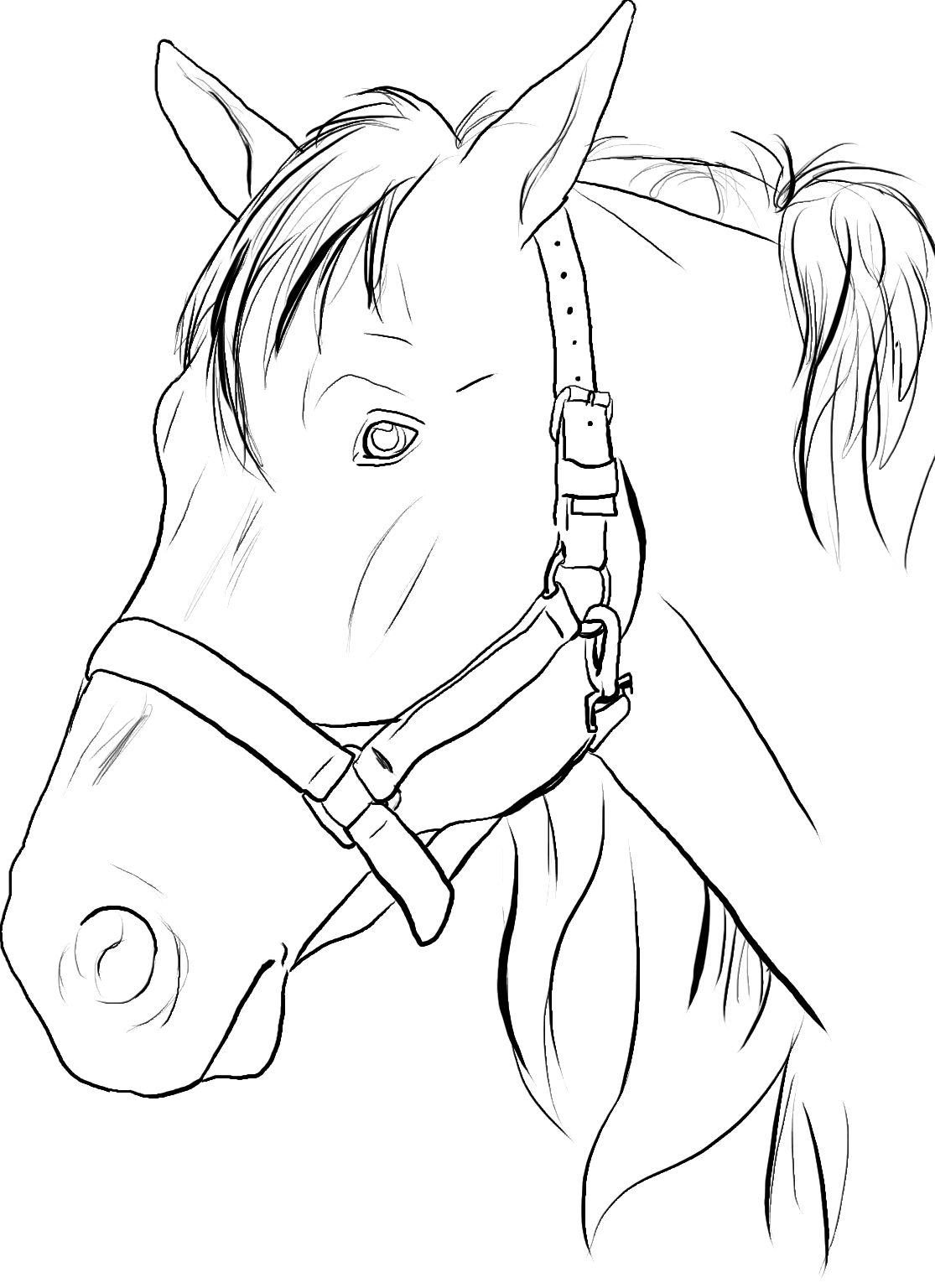 horse head coloring page # 5
