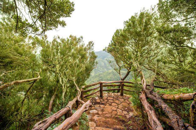 Garajonay National Park on the island of La Gomera, Canary Islands.