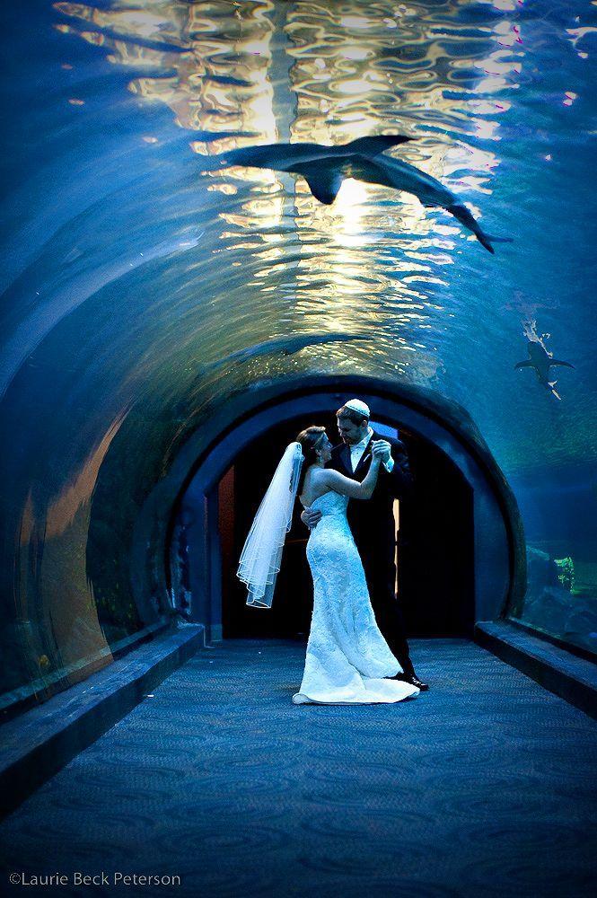 Camden Aquarium in Camden NJ | New Jersey | Mo's Wedding in