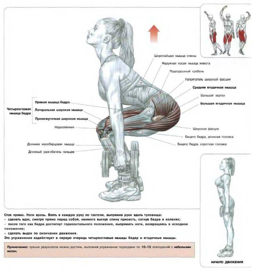 упражнения для ягодиц | Упражнения, Ягодицы, Упражнения ...