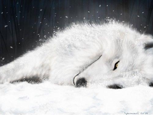 Wolf S Rain Wallpaper The Last Breath Minitokyo White Wolf Wolf S Rain Fantasy Wolf