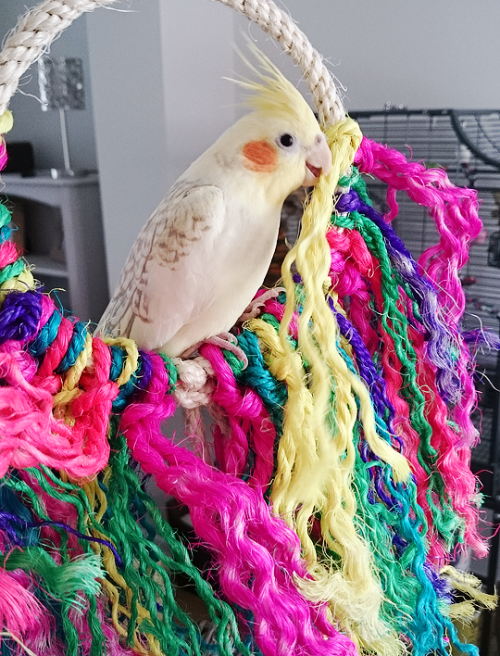 darcythetiel: got some new toys for him earlier, he was super curious and wanted to investigate straight away Awashed in the rainbulb! See the rainbrown! TAST the ranbower. my investigatin….. yield….. improtrtato result. Detective Dangers on the case. 8/10 i live on a symbolism, of Pride.