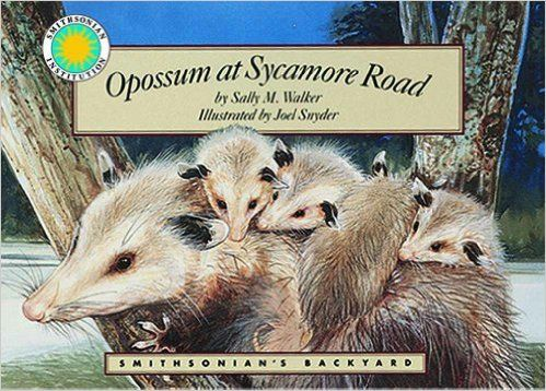 Opossum at Sycamore Road - a Smithsonian's Backyard Book: possum books