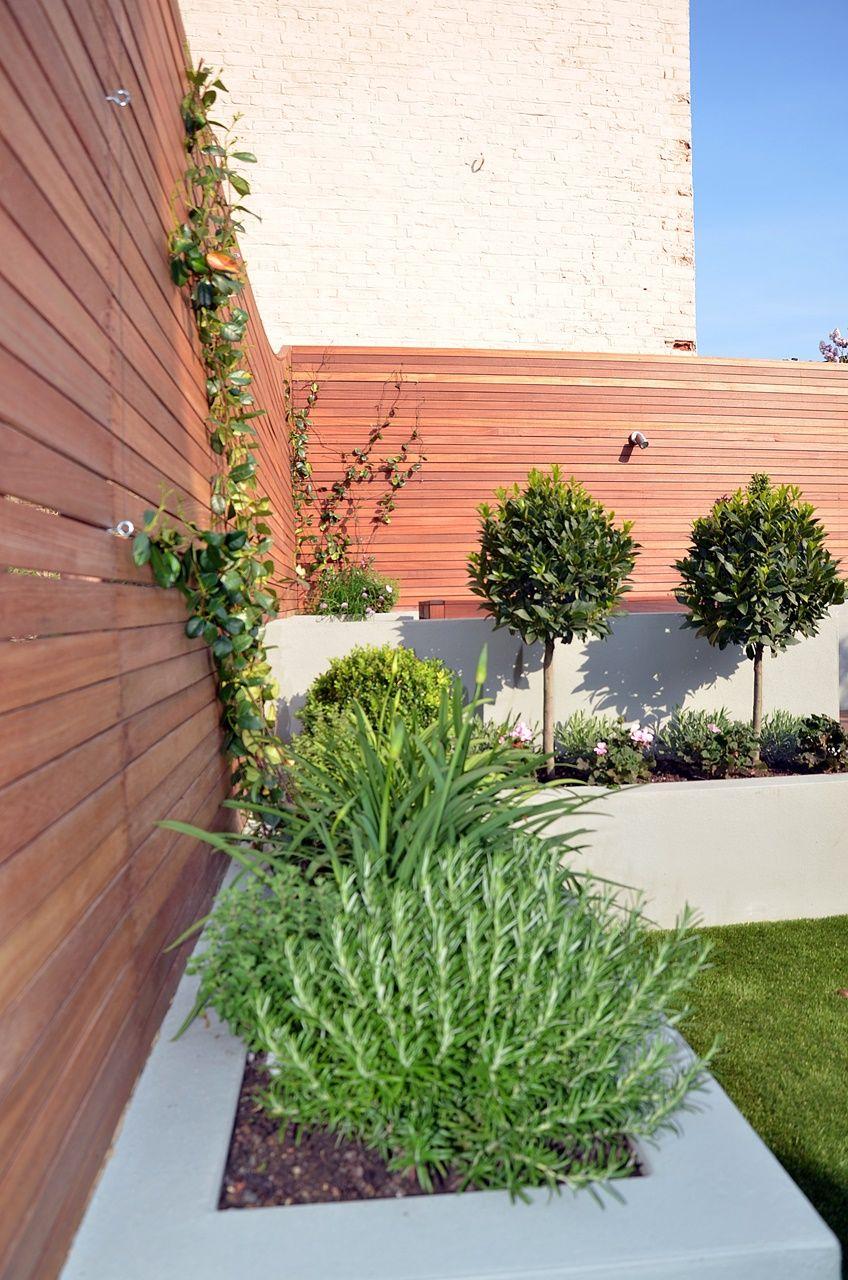 Topiary Garden Design Ideas Part - 34: Grey Raised Beds Hardwood Scren Trellis Fence Topiary Garden Design London