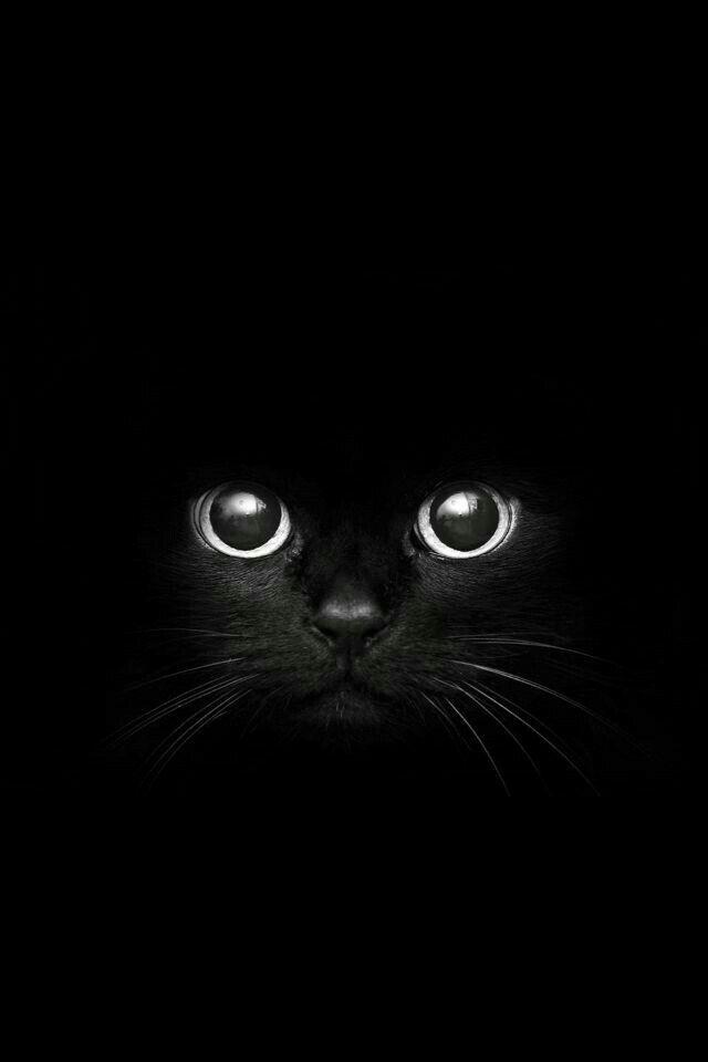 Book Covering Contact Black : Gato negro fondos de pantalla pinterest