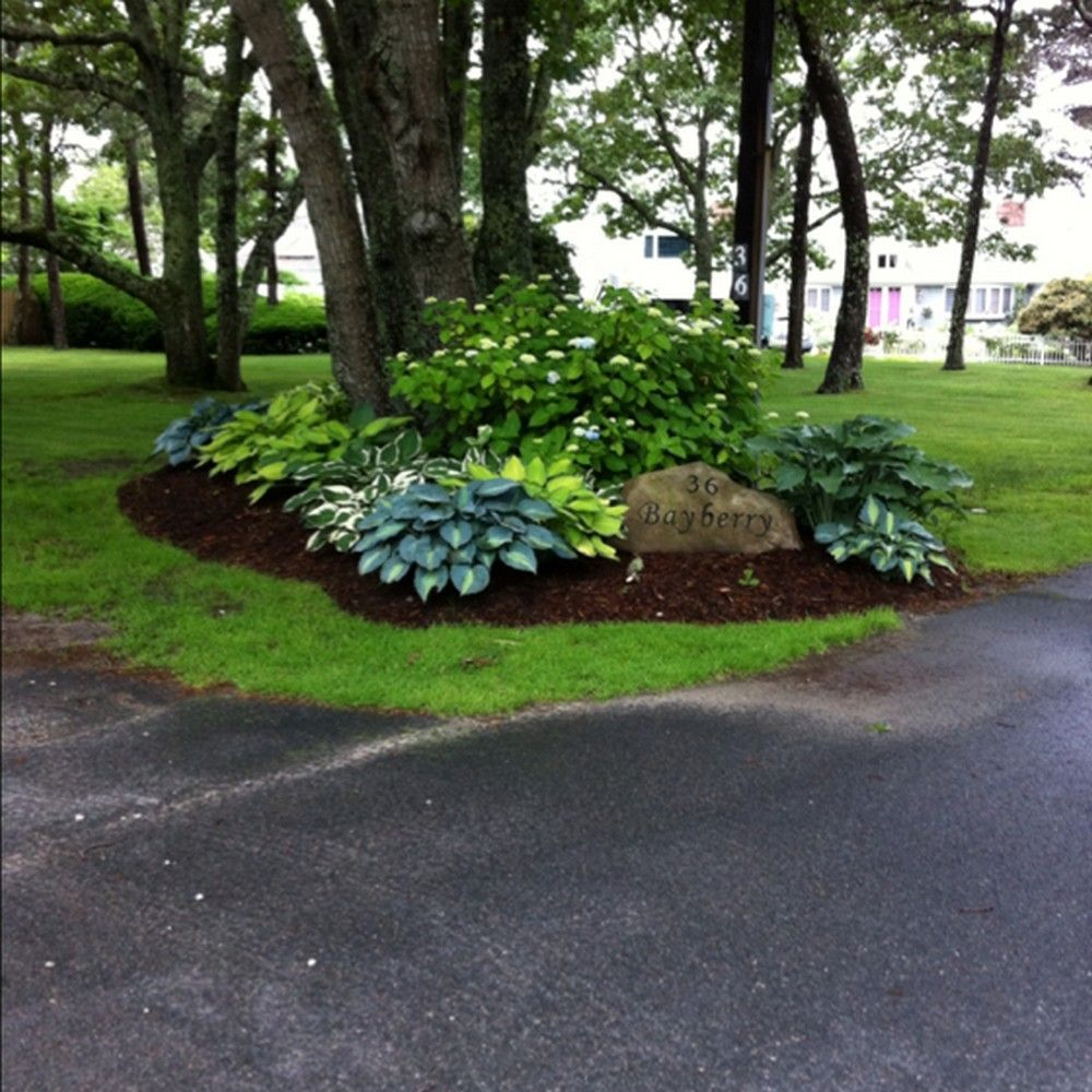 Front yard driveway landscaping ideas  Pin by Kim Phinney on Gardens and Landscapes  Pinterest  Yard