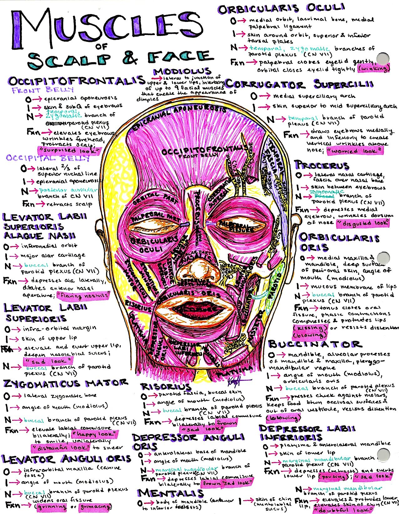Hanson\'s Anatomy Med School Notes & Illustrations. The most colorful ...
