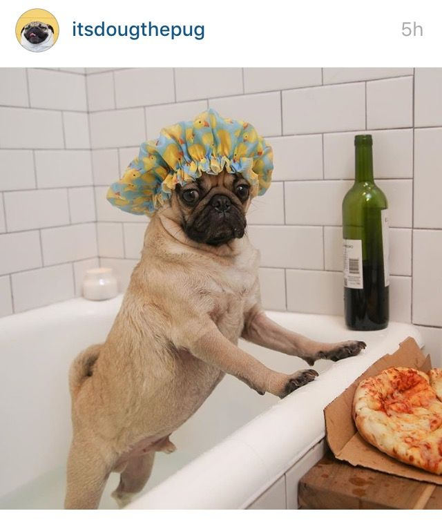 10 Pugs You Need To Follow On Instagram Funny Animals With