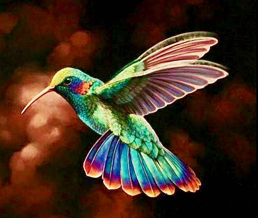 самом деле картинки птички колибри нарисовать