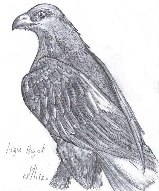 Aigle royal mlice blog de dessin amateur animaux - Dessin oiseau en vol ...