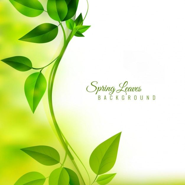 Limb with green leaves on unfocused background Free Vector ...