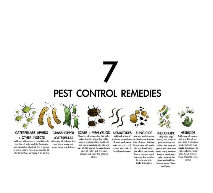 Pest Control, Natural Pest Control