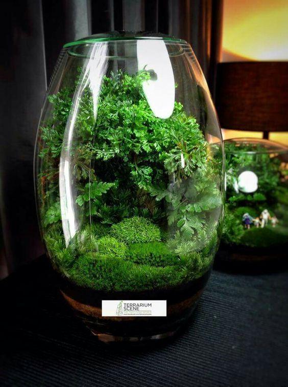 How To Make A Terrarium In A Glass Bowl Terrariums Container