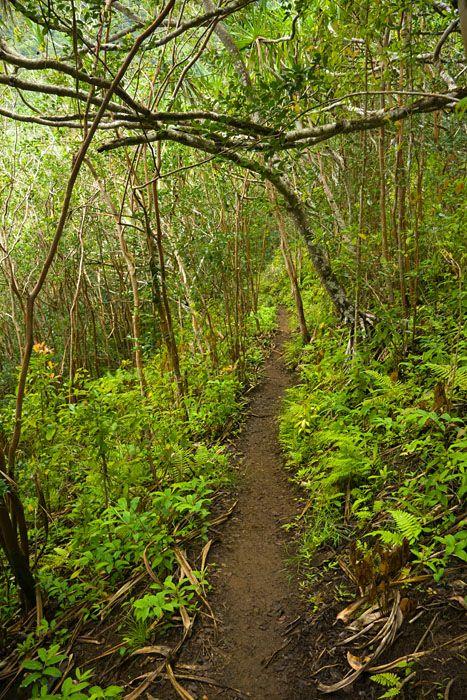 Hiking Trail high in the mountains around Kualoa Ranch