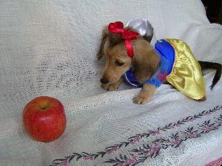 Dog In Snow White Disney Costume Disney Apple Disney Costumes