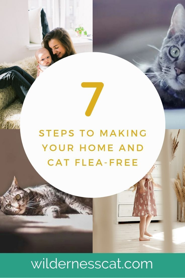 How to get rid of cat fleas in the house a 7step guide
