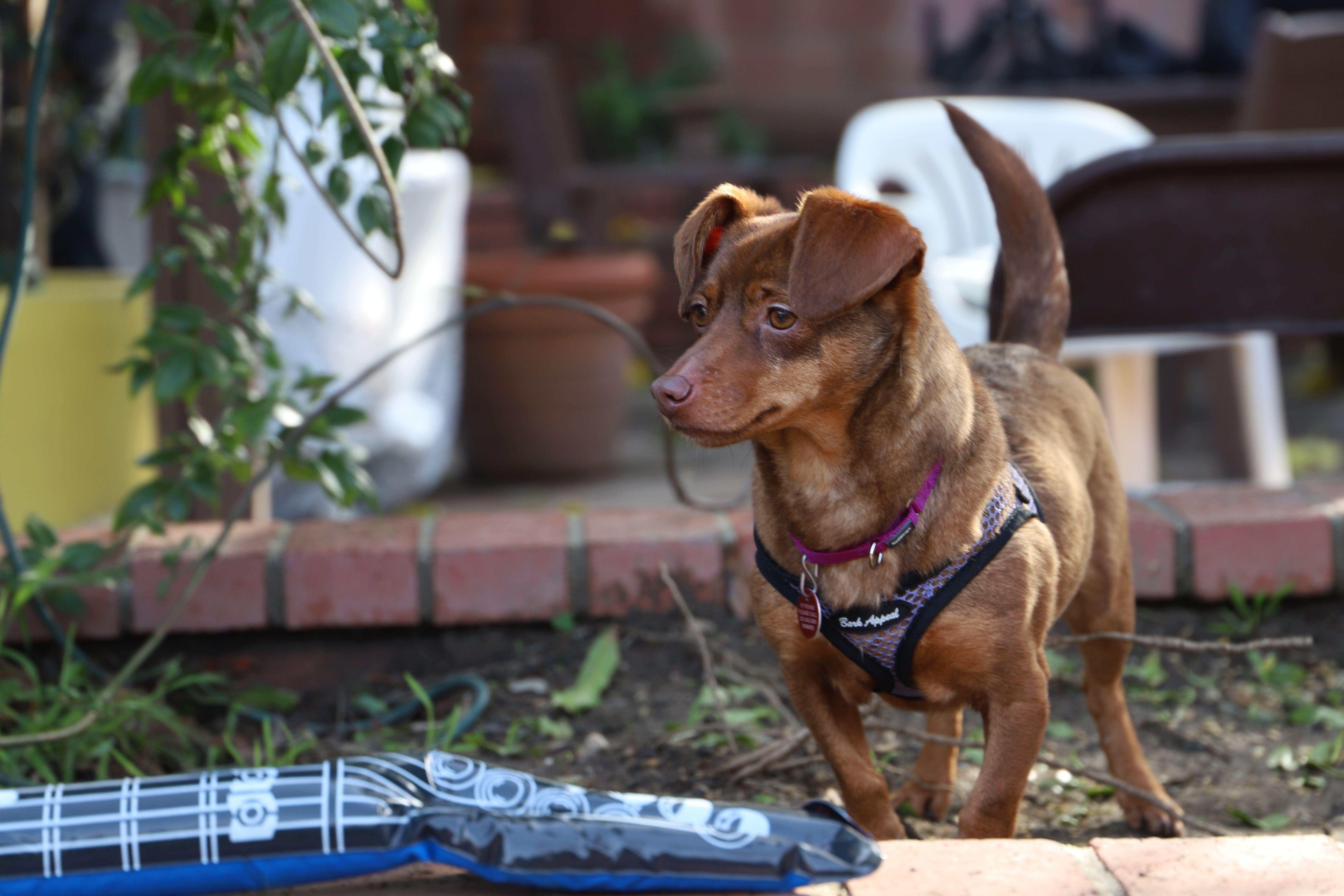 Adopt Rae On Animal Rescue Pet Adoption Pets