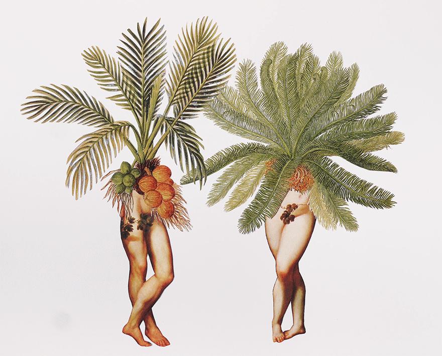 Artist Amy Ross | The Palms