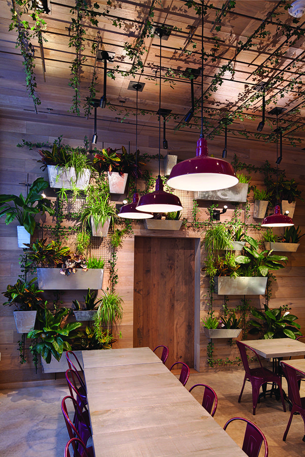 So many plants. We love our vegetation here at Kontiki ...