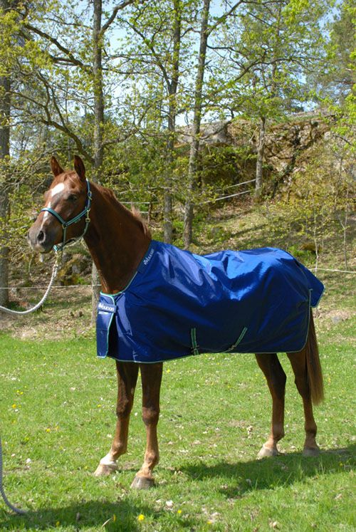 The Bucas Smartex Turnout Is Perfect Rug For Busy Horse Owner With A