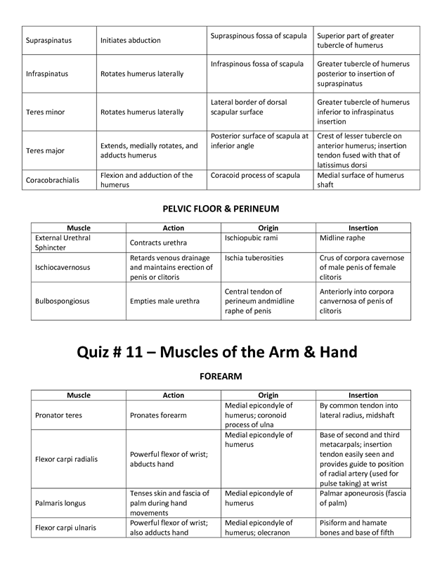 muscle list action origin insertion mrs smutz | massage test, Muscles