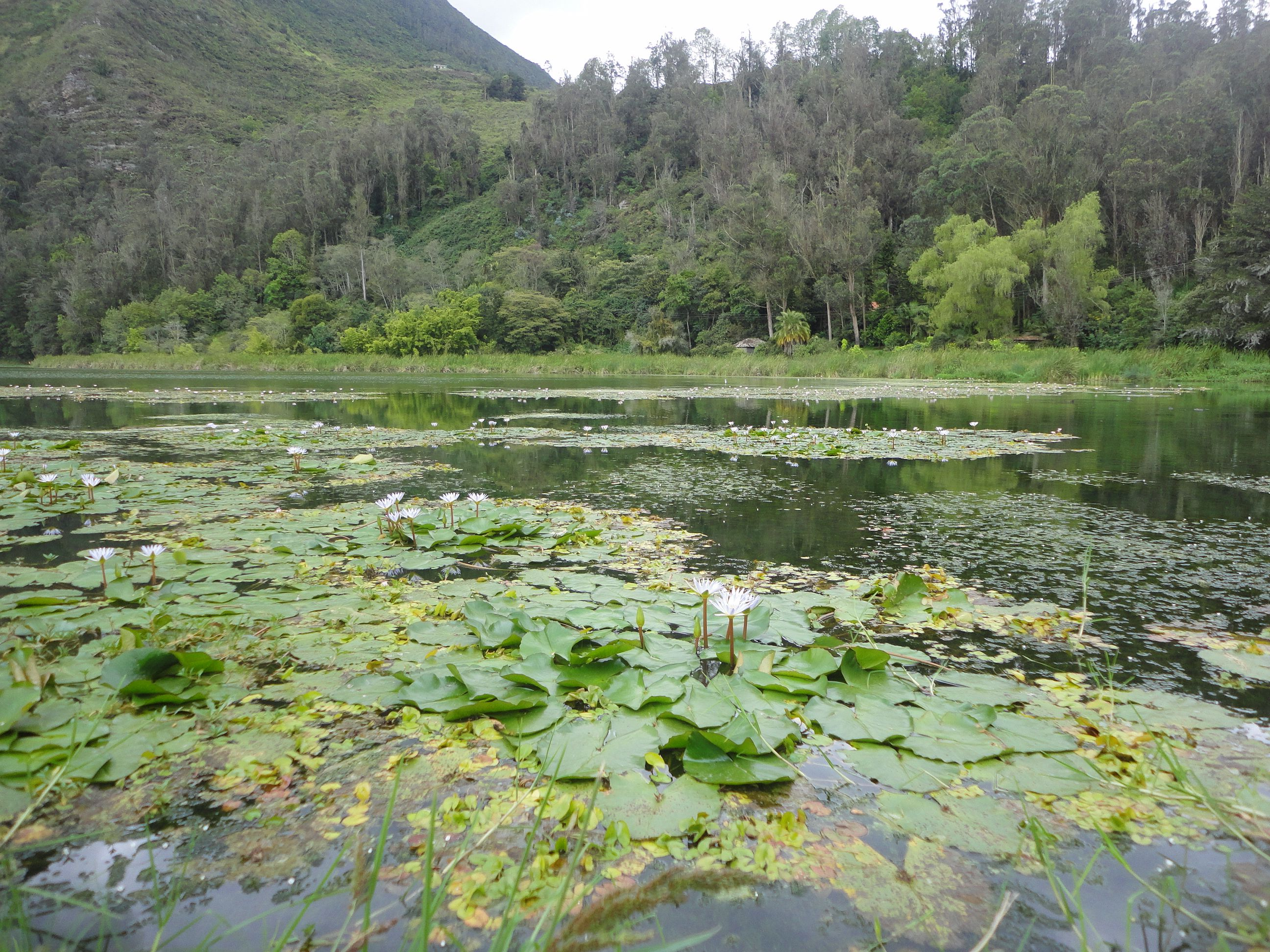 Laguna de Ubaque,Colombia Foto de Nirza López