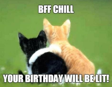Happy Birthday Best Friend Meme Funny Happy Birthday Meme Cat Hug Cat Love Kittens Cutest