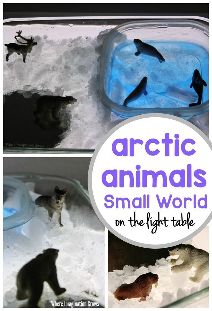 Arctic Animals Small World on the Light Table (With images