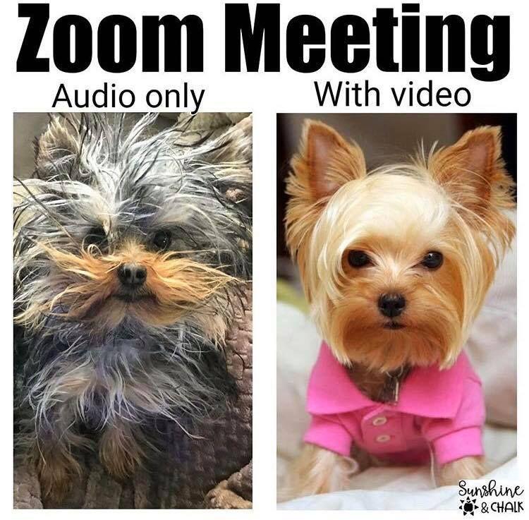 Funny Zoom Meeting Funny Zoom Meeting Memes De Clase Memes Divertidos Memes Escolares