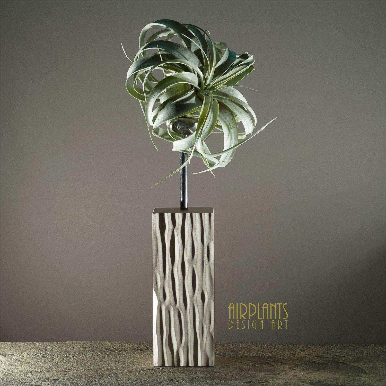 Luchtplanten Design Kunst Brengt U Duinen Ontwerp In Hout Handgesneden