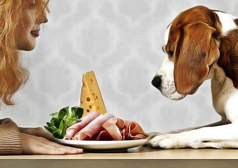 Chien qui refuse de manger que faire chien nourriture