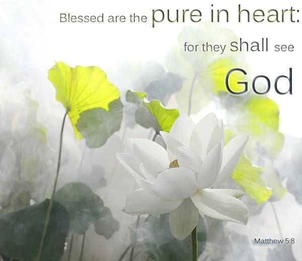 Matthew 5:8 https://www.facebook.com/iBibleVerses/photos/704605682925993