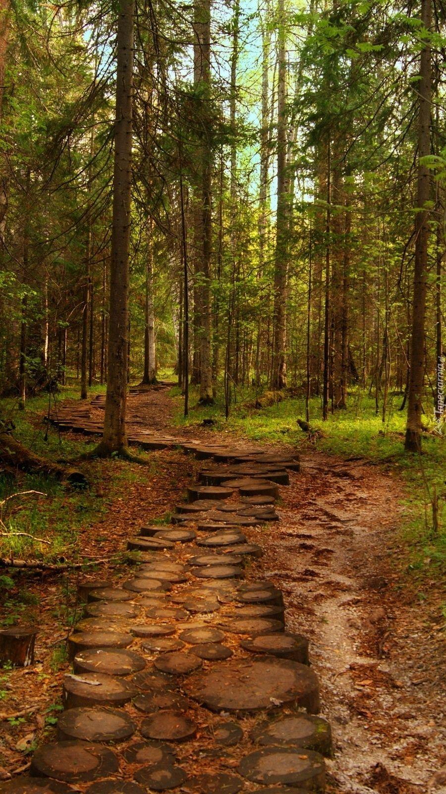 Ścieżka przez sosnowy las