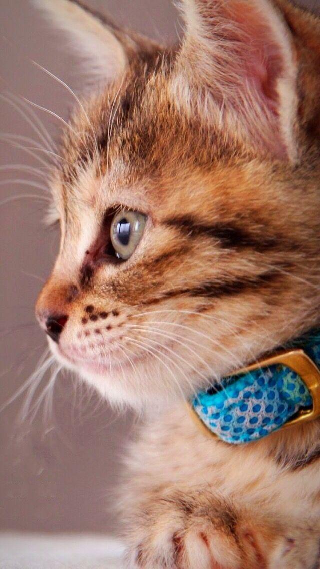 Wallpaper Iphone Cute Cute Cats Photos Cute Cats