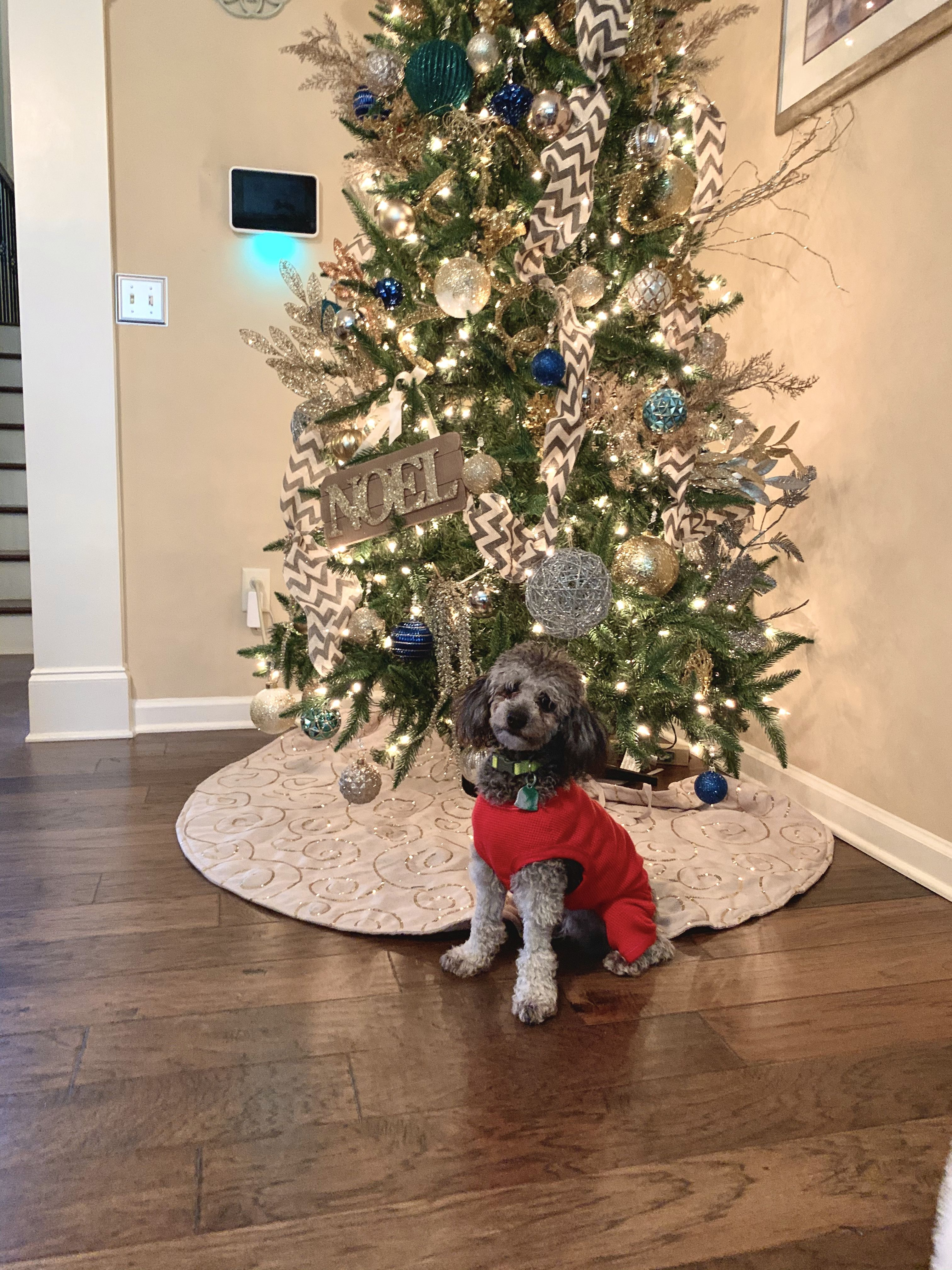 Pin by Savannah Harris on Poodle in 2020 Holiday decor