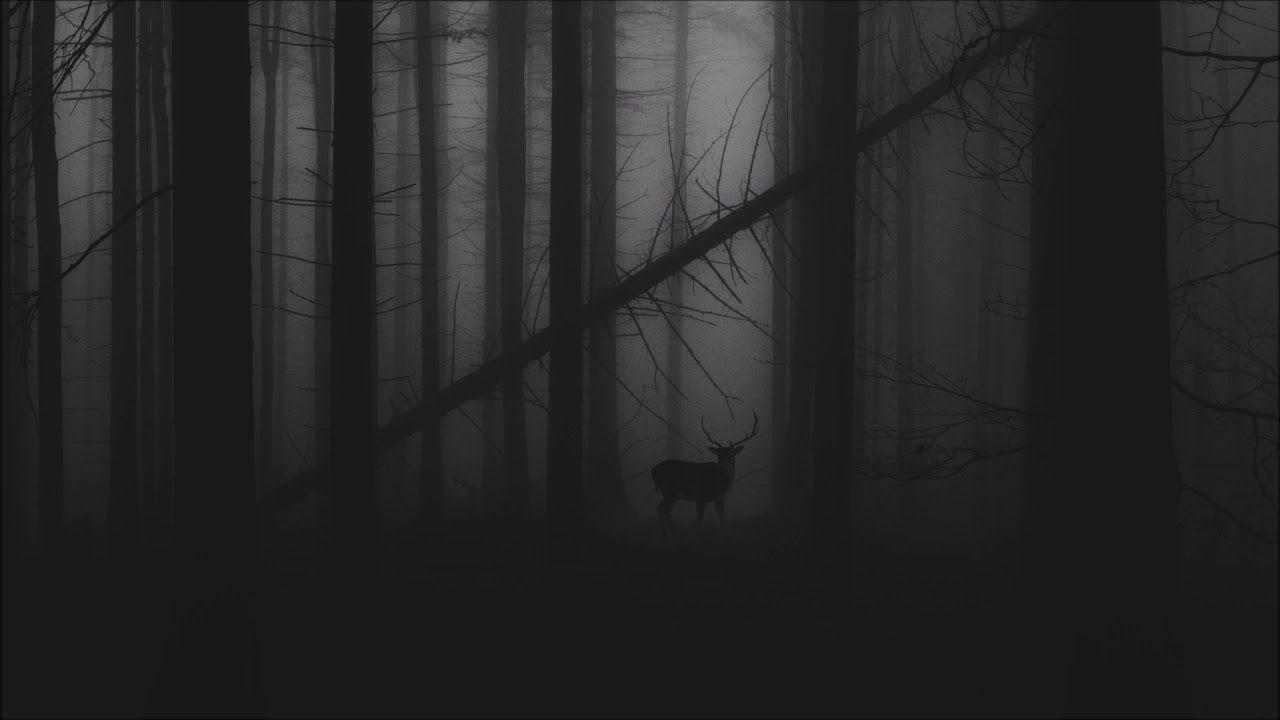Sorrow Through The Night Dark Wallpaper Desktop Wallpaper Forest Wallpaper