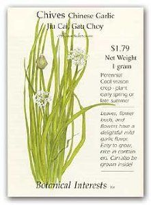 Bestclothing365 Com Garlic Chives Chive Seeds Perennial Herbs