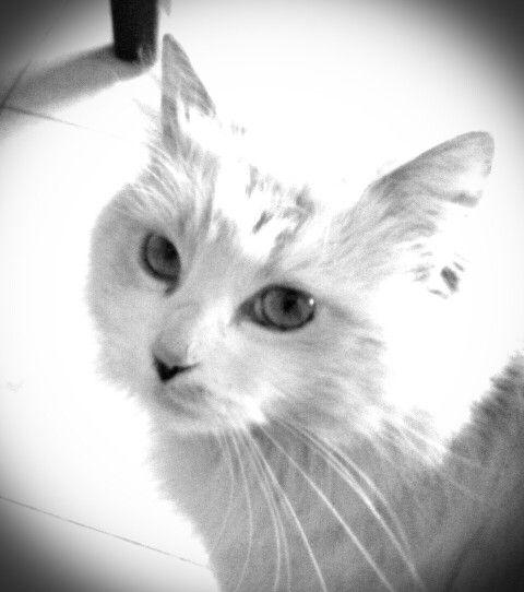 Mi bella kitty!!