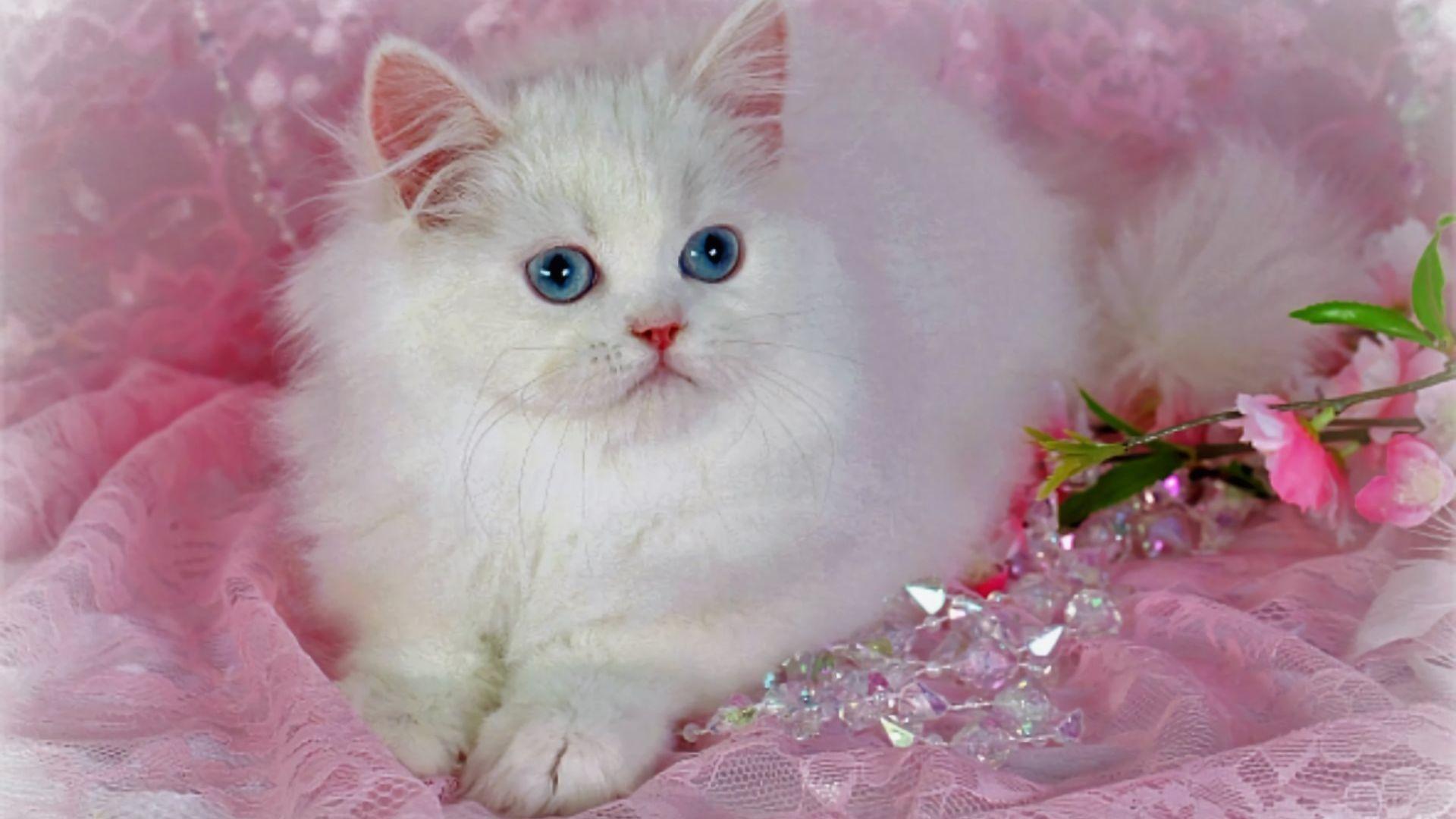 Beautiful Cat Wallpaper With Images Cat Wallpaper Beautiful