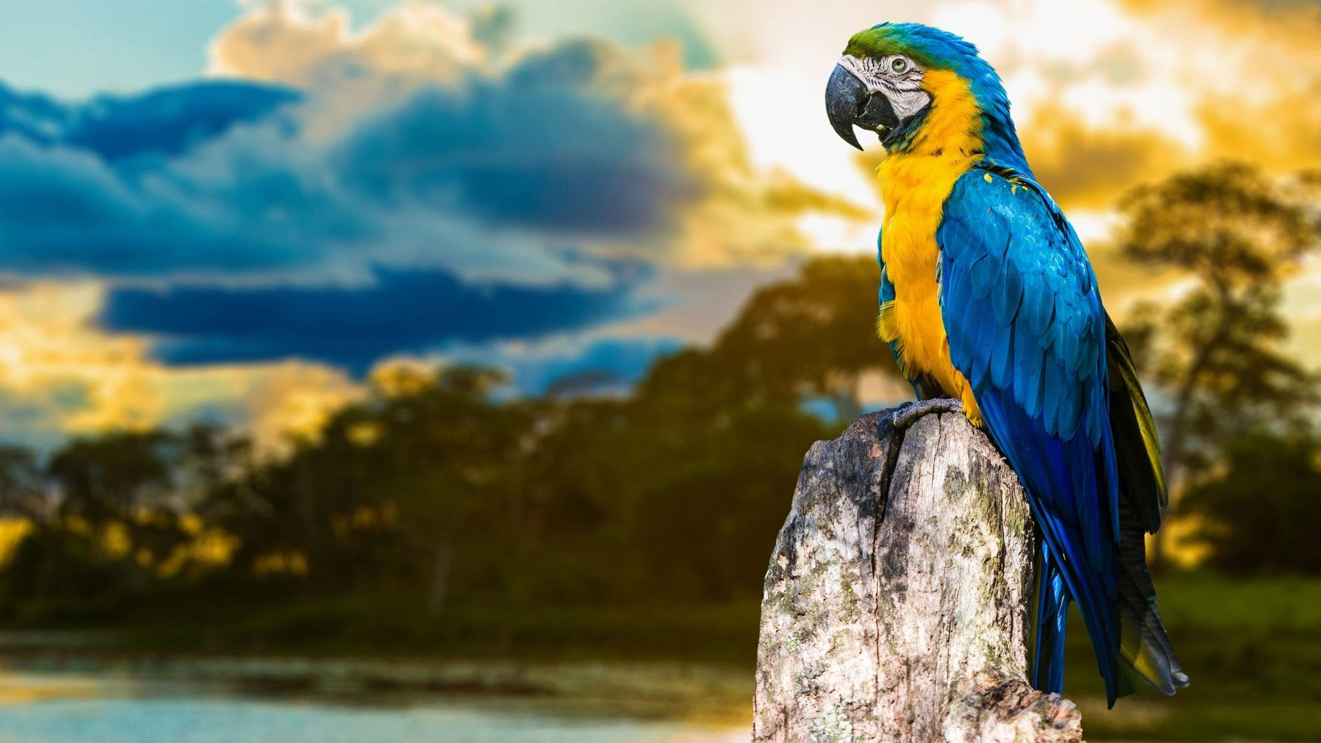 Dwnld Cute Little Bird Walpaper Free Fr Mobile: Macaw Bird Big Parrot Wallpaper For Desktop And Mobile